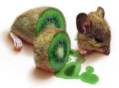 veggie-mouse.jpg